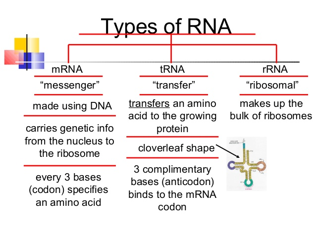 unit-5-dna-etc-for-moodle-2013-14-638